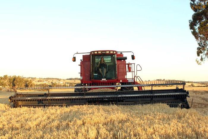 IRE-Aus-Harvest-1