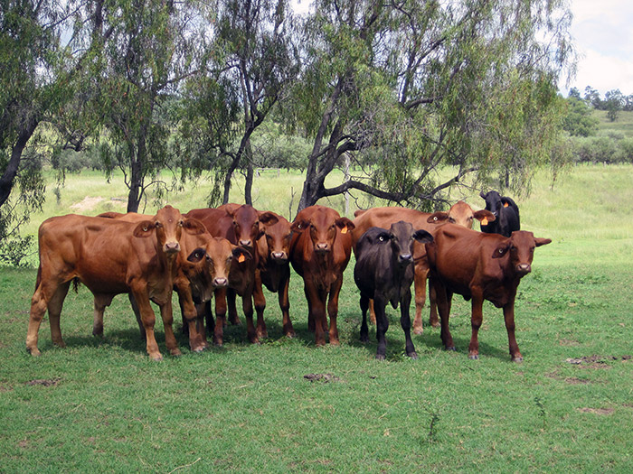 gaggle-of-weaners-equipeople