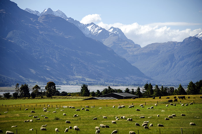 new-zeland-work-placement