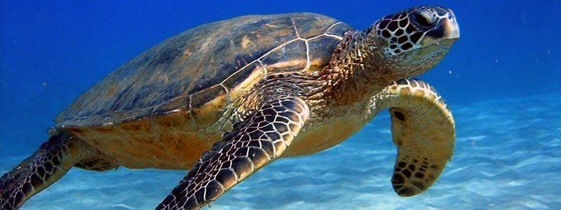 sea-turtle-greece